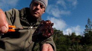 steven rinella meat eater
